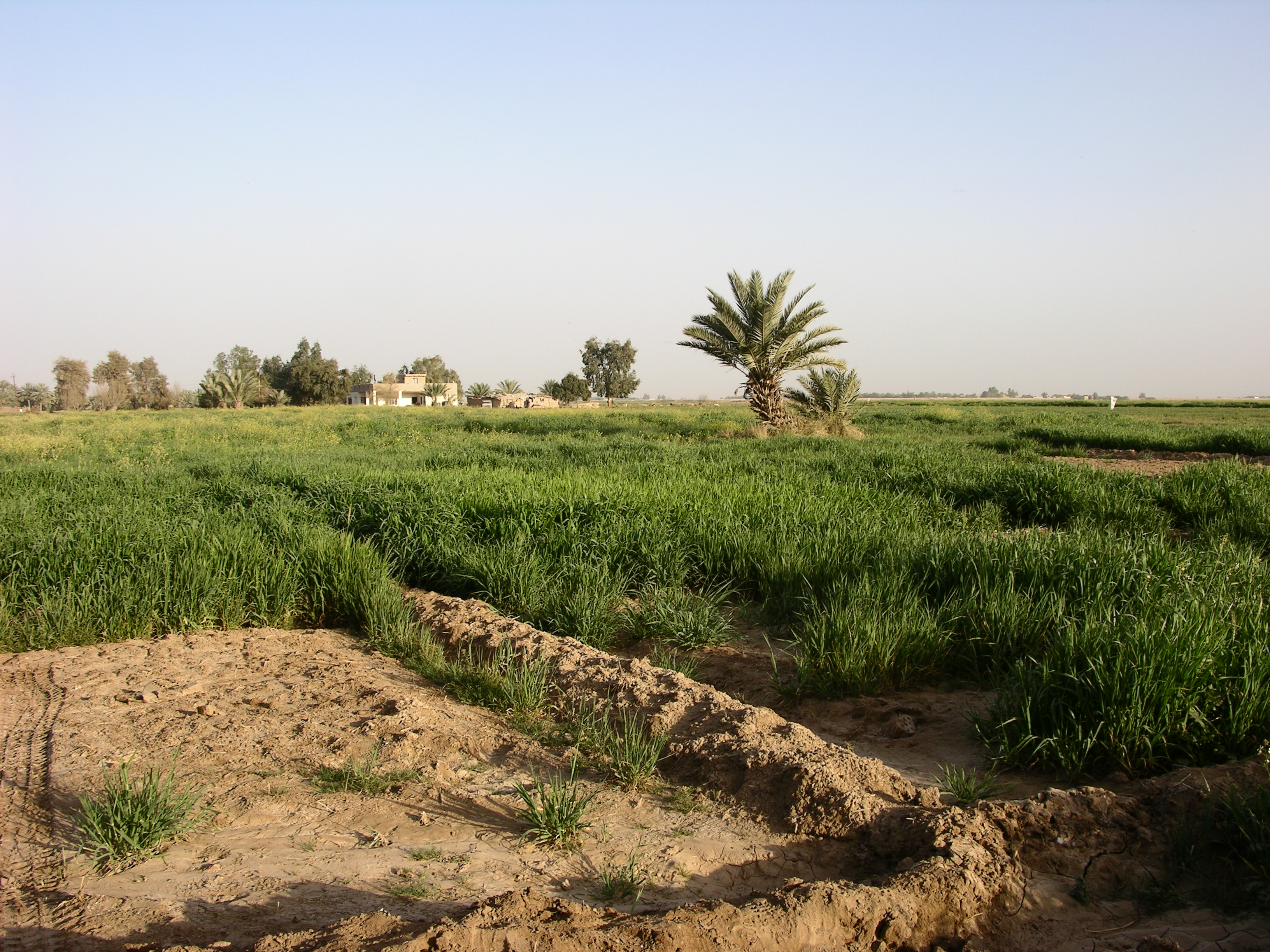 Iraq isn't all desert and urban cityscape. Iraq is the birthplace of irrigation, and agriculture has existed in the region for over ten thousand years.